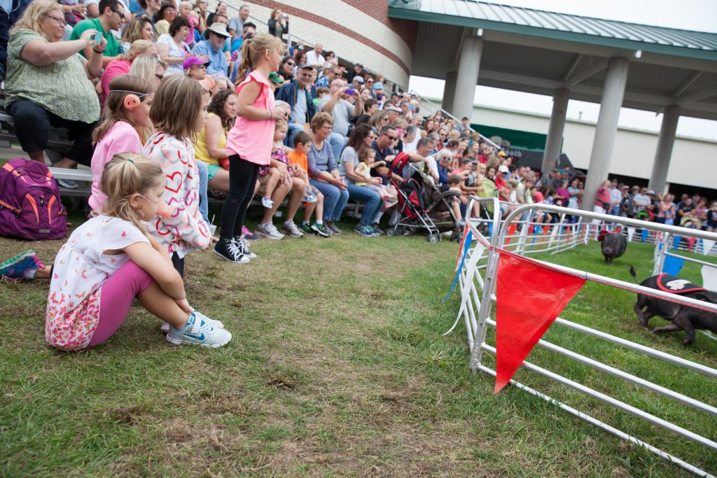 Pig racing at the Big E. (Credit: Ryan King/ WNPR)