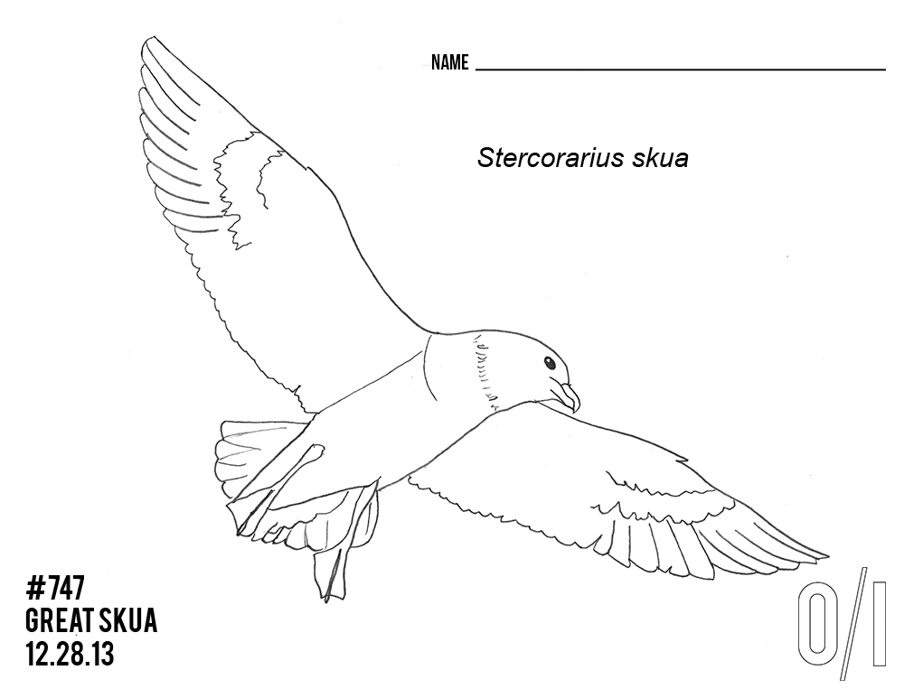 A great skua for your coloring pleasure. (Credit: Outside/In)