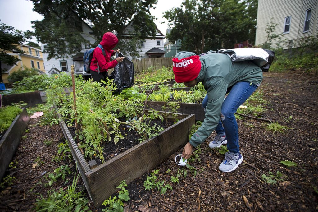 "In the ""Live Or Die Garden"" on Ellington Street, Kenisha Allen of Mattapan (r) and Keema Green of Dorchester pick up trash that has blown around the raised garden beds from around the neighborhood. Photo by Jesse Costa for WBUR"
