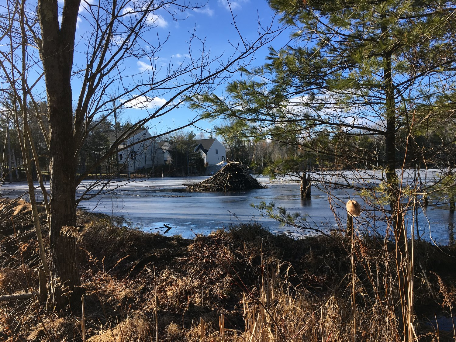 episode 51 not in my backyard new england news collaborative