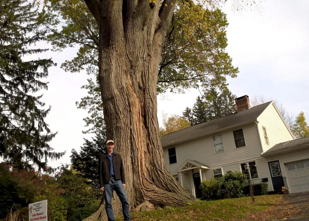 Forest ecologist Christian Marks is dwarfed by one of the oldest elm trees in Massachusetts. Photo by Jill Kaufman for NEPR