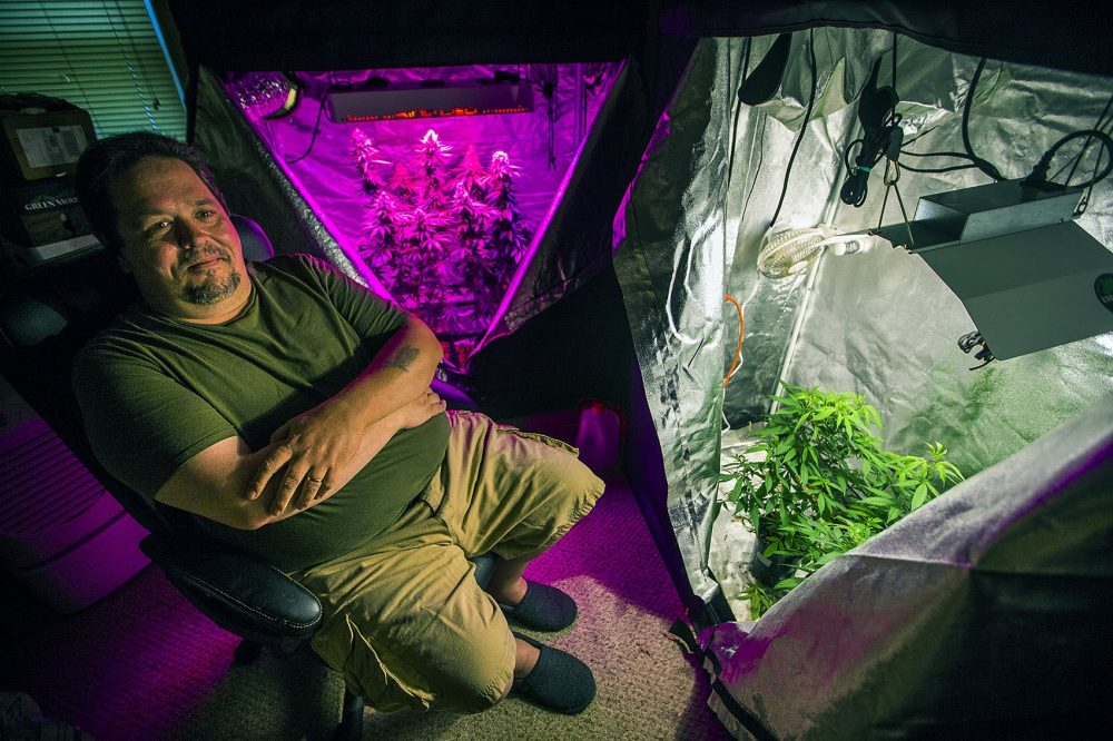 Peter Bernard, president of the Massachusetts Growers Advocacy Council, sits in his small grow room in his Taunton home, where he uses both LED and halide lights. Photo by Jesse Costa for WBUR