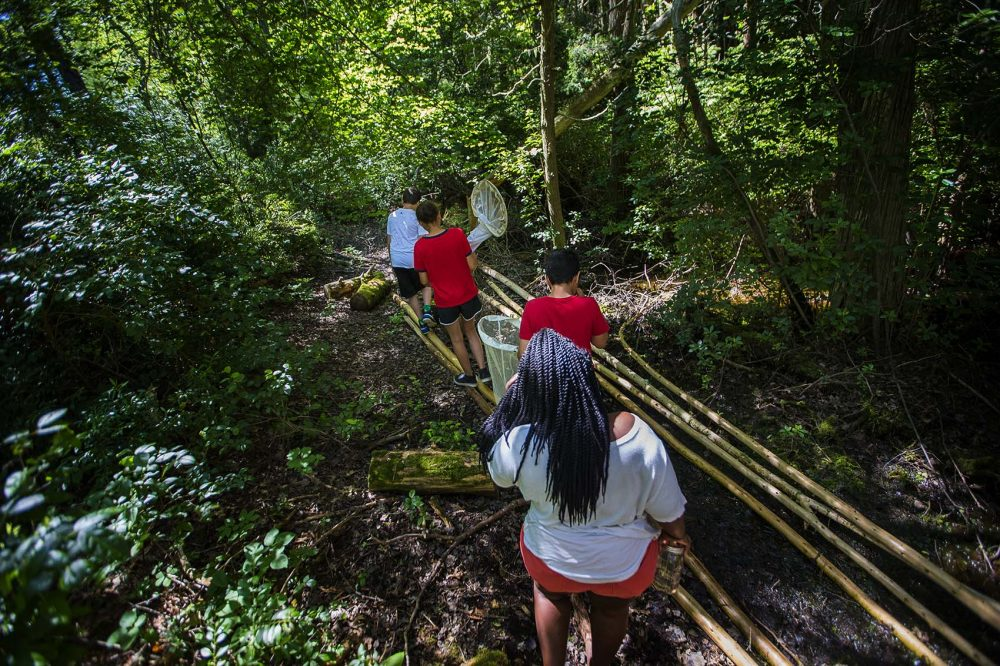 Campers from the Mashpee Wampanoag tribe search for bugs in the cedar swamp. Photo by Jesse Costa for WBUR