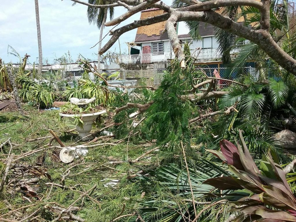 A photo of Carla Gomez' backyard in the aftermath of Hurricane Maria. Photo courtesy of Carla Gomez