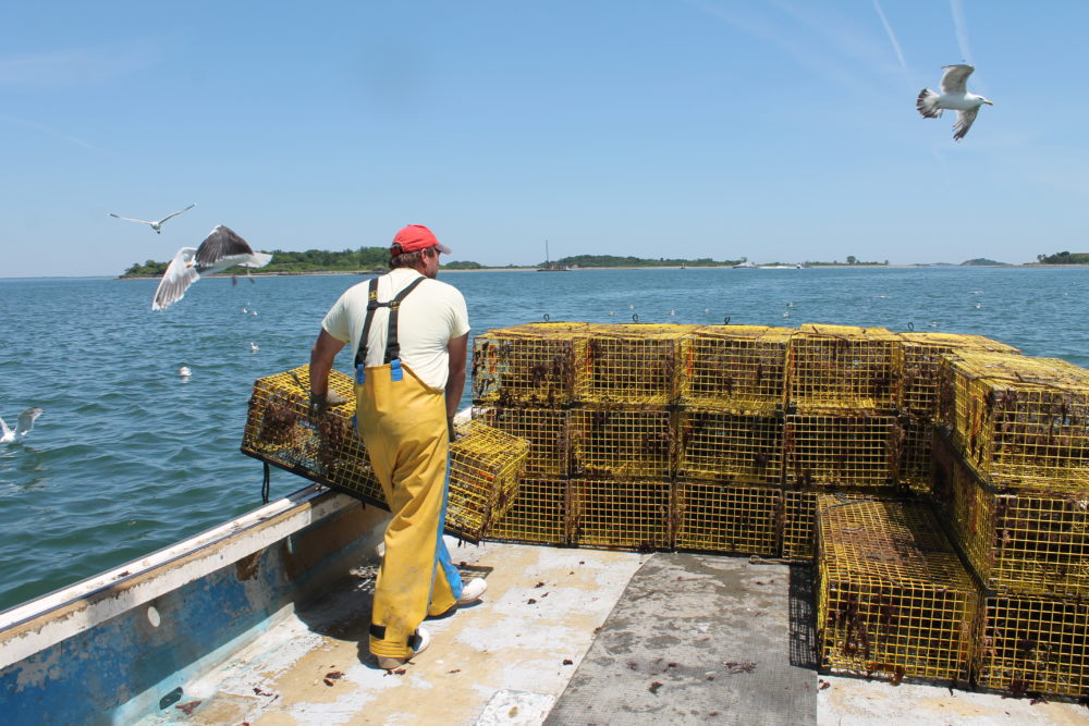 "Sternman Frank Lenardis hauls lobster traps to the back of the boat, as part of what lobsterman Steve Holler refers to as ""a dance between me and him."" Photo by Hannah Chanatry for WBUR"