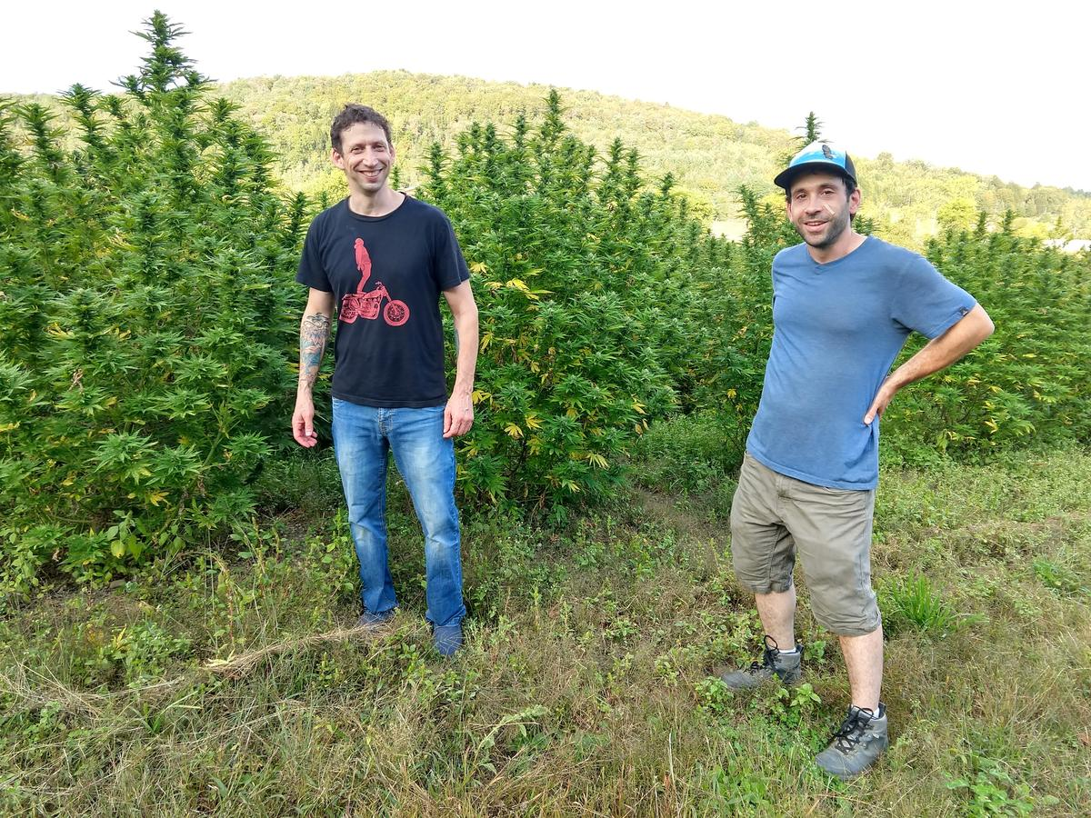 Alejandro Bergad, left, and Jacob Goldstein of Green Mountain CBD in front of a hemp field in Hardwick in July. Photo by Jon Kalish for VPR