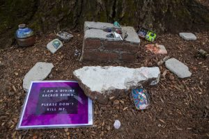 Items left at the base of the tree showing opposition of the it's removal in front of Andover Hall. Photo by Jesse Costa for WBUR