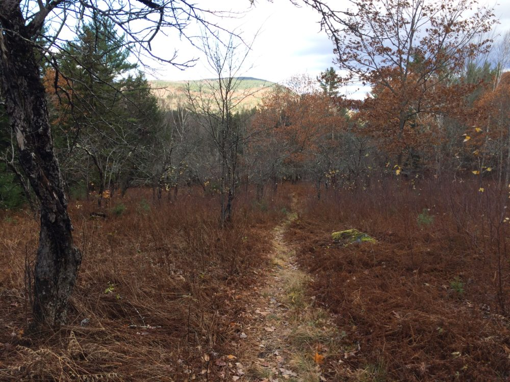 A mountain bike trail in Thornton, N.H. Photo by Sam Evans-Brown for NHPR