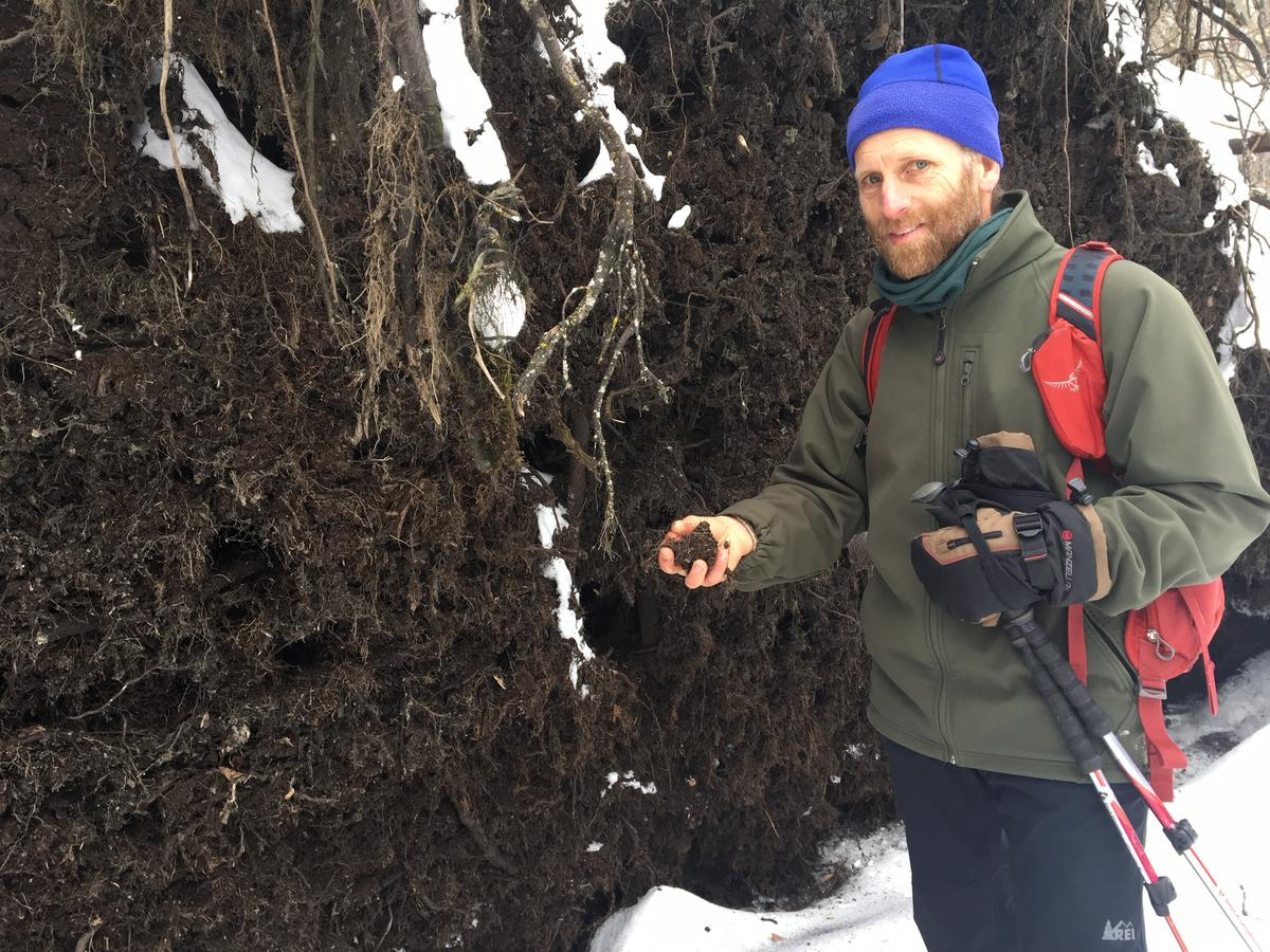 Scientist Marc Lapin checks out the rich organic material revealed by a fallen tree in the Cornwall swamp. Photo by John Dillon for VPR