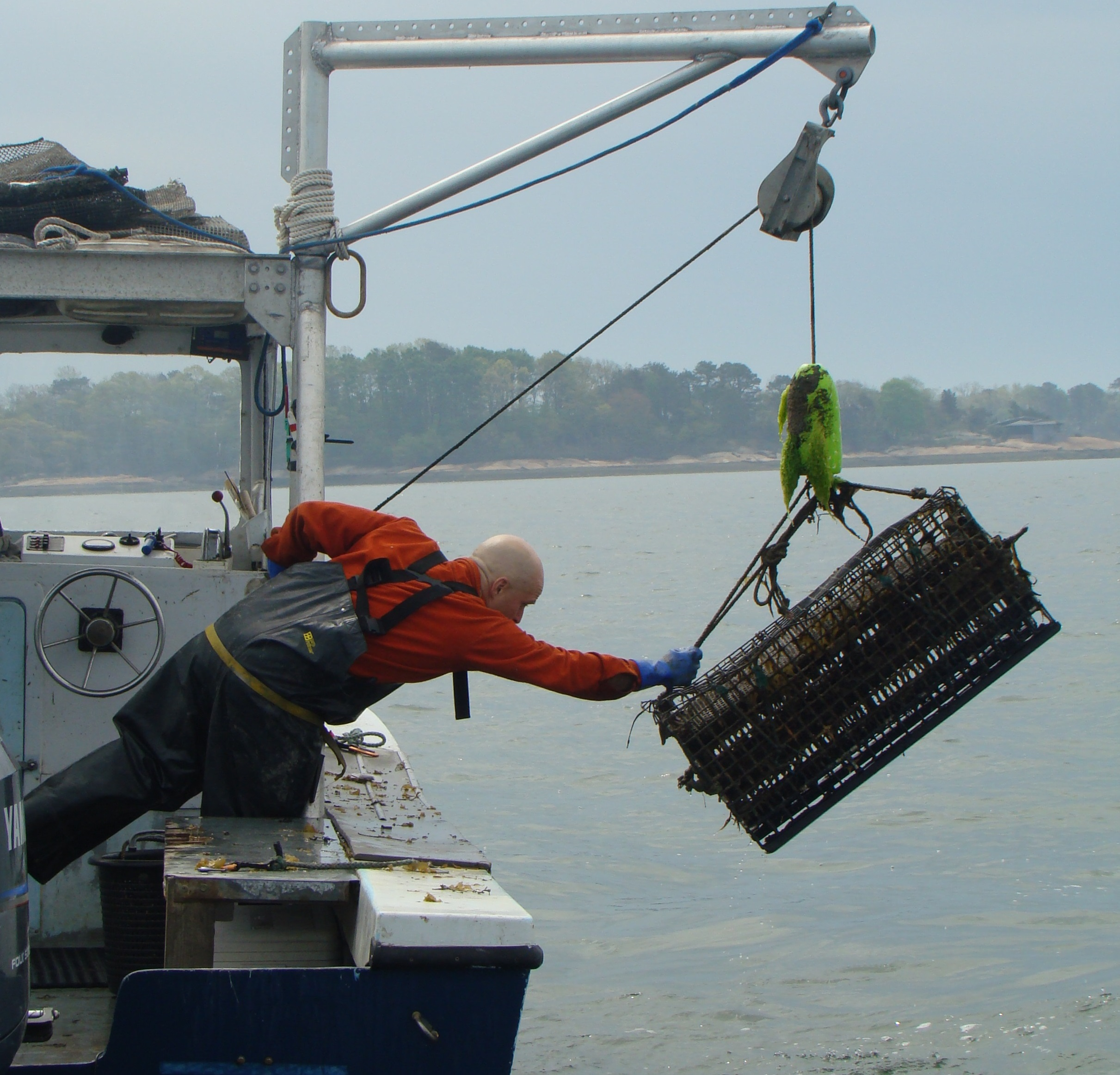 Bren Smith hauls oysters in from his ocean farm. photo courtesy of Bren Smith