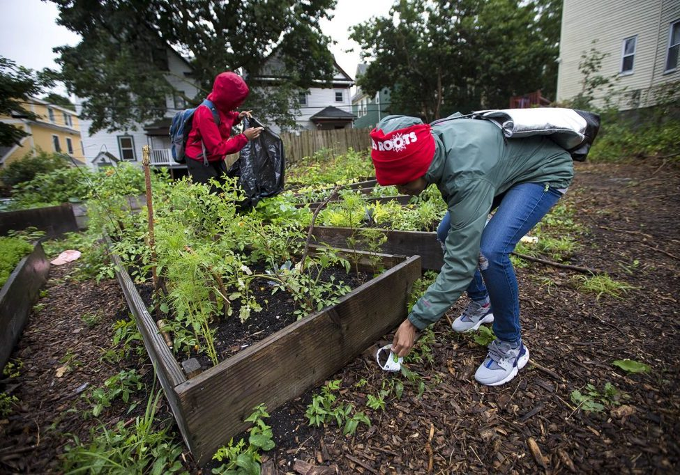 """In the """"Live Or Die Garden"""" on Ellington Street, Kenisha Allen of Mattapan (r) and Keema Green of Dorchester pick up trash that has blown around the raised garden beds from around the neighborhood. Photo by Jesse Costa for WBUR"""