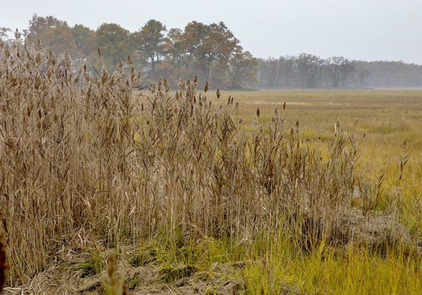Fall colors in the marshes around Plum Island Sound. Photo by Robin Lubbock for WBUR