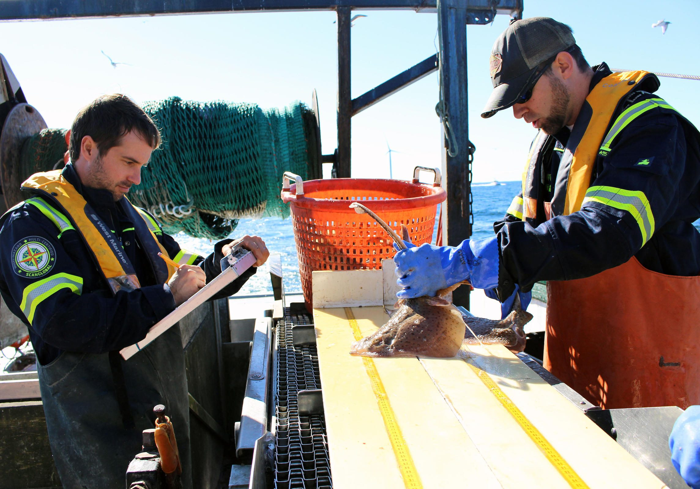 Matthew Griffin and Brian Jenkins measure and weigh all fish species caught for research on the Block Island Wind Farm's potential impacts to fish. Photo credit: Ambar Espinoza