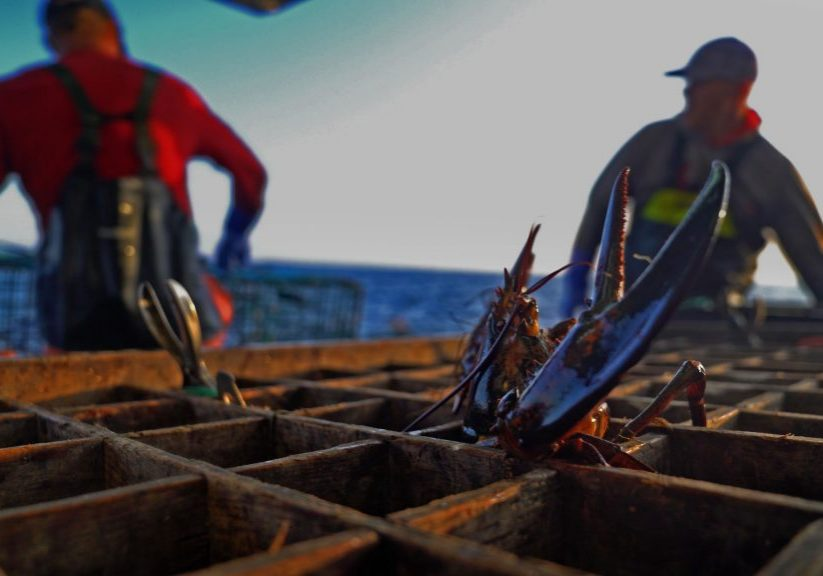 A lobster in a crate. Photo by David Abel from Lobster War.