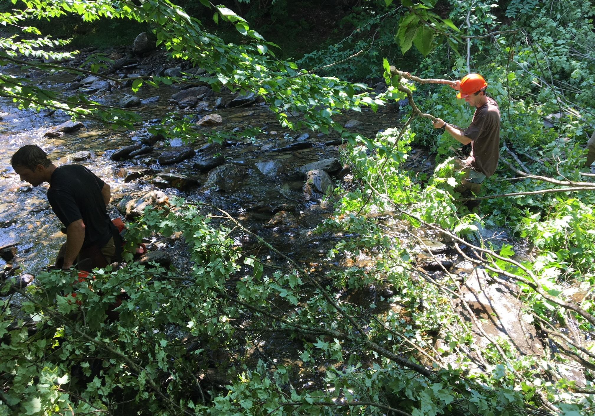 To improve habitat on Calavale Brook, first you have to drop some trees in the stream. Photo by John Dillon for VPR