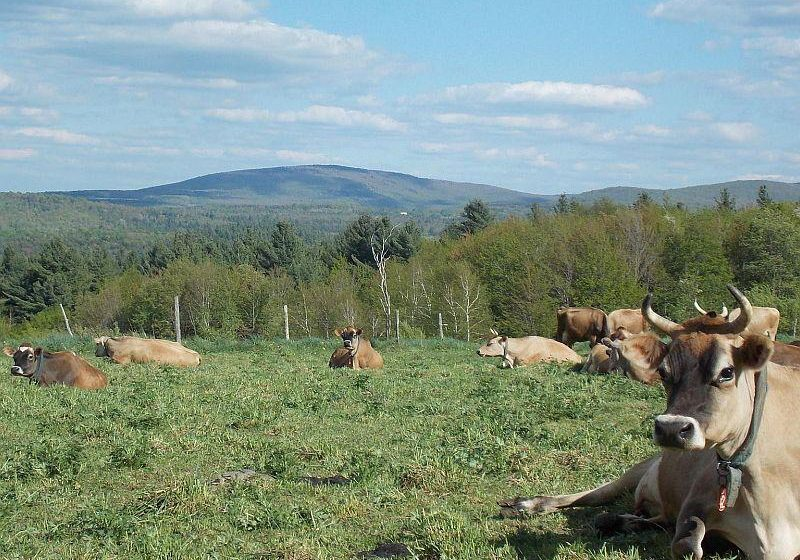 Vermont has lost 66 dairy farms this year, and that has prompted farmers to consider news ways to stay in business by controlling the over-supply of milk. Photo courtesy of Butterworks Farm